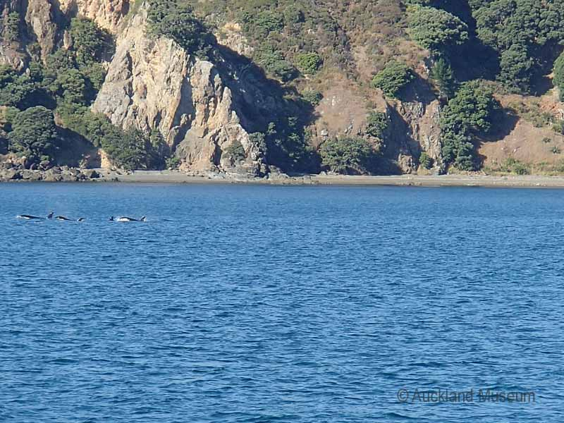 Our first unexpected find: a pod of orca whales