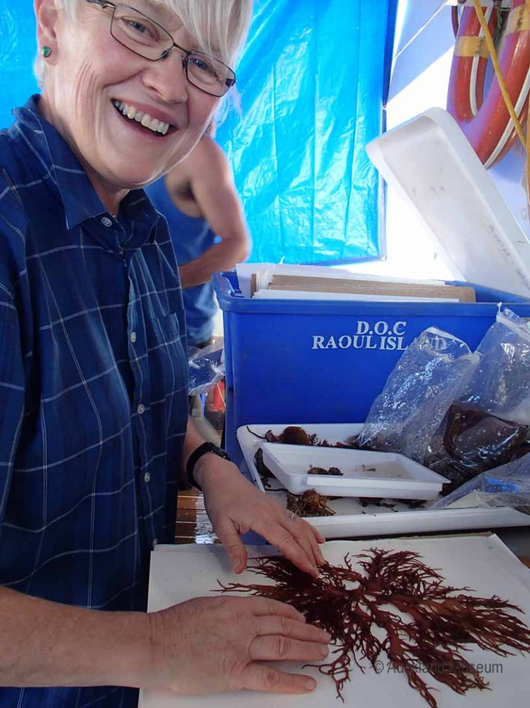 Happy seaweed folk - Wendy sorts through the Roberta's finds from her dive around the Cavalli Islands