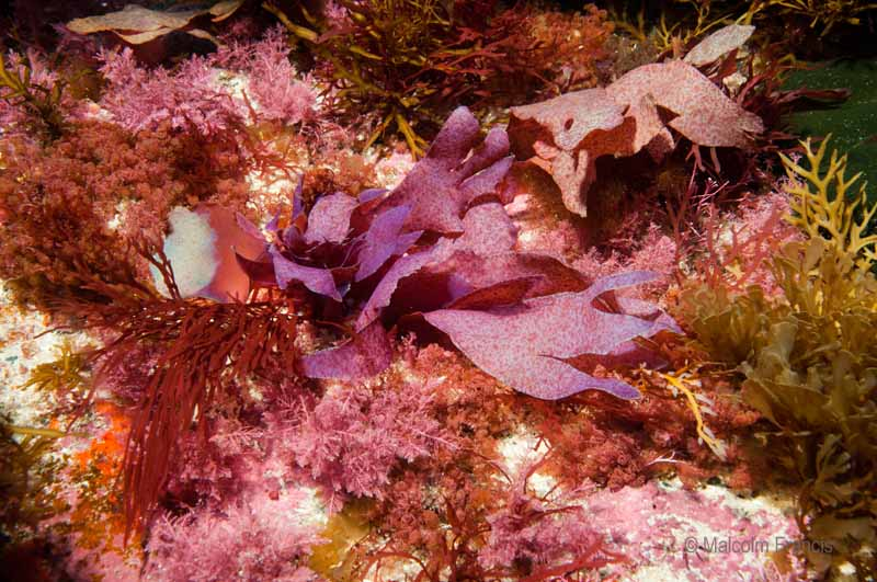 A mixed bouquet of seaweeds: our seaweed experts can see at least 12 different kinds in this one area